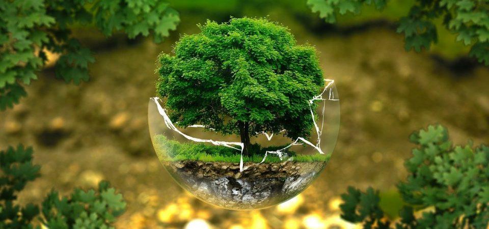 Comment participer à l'écologie en tant que salarié ?